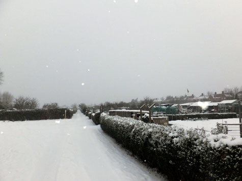 Whitemoor Snow
